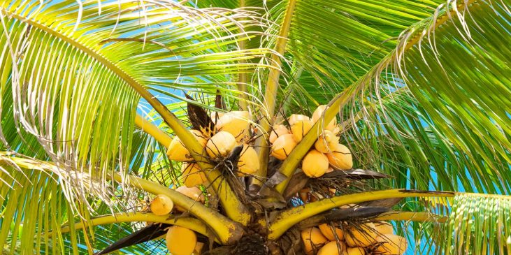 product-header-coconuts
