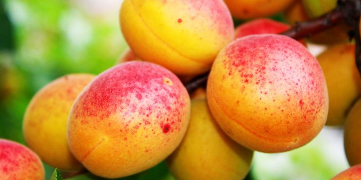 product-header-fruits