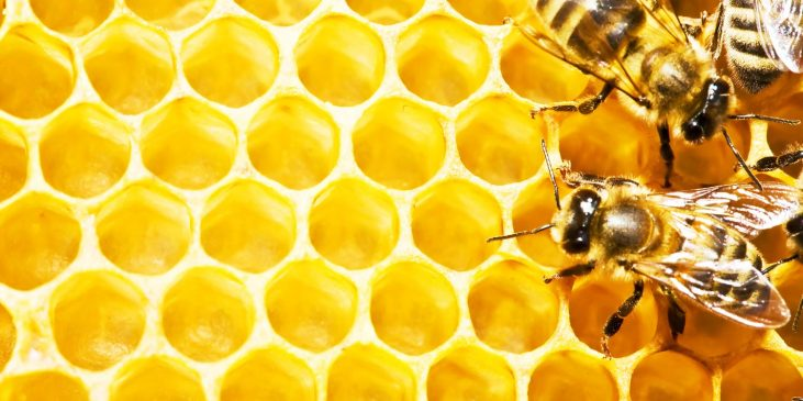 product-header-honey